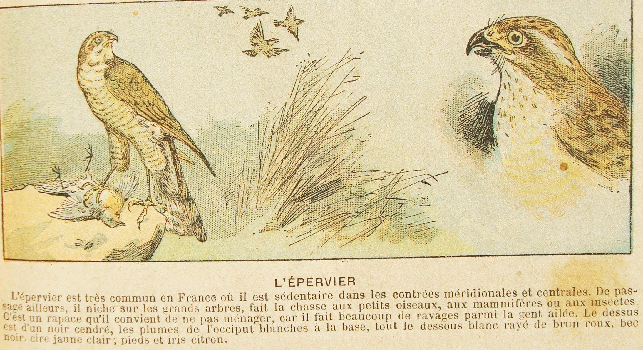1895 manufacture le miroir alouettes for Miroir au alouette