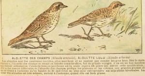 Gravure de 1894