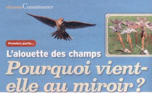Alouette et le Miroir 1 300x184 - Le Miroir et l'Alouette