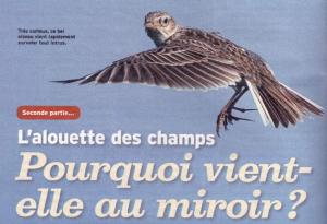 Alouette et le Miroir 2 300x205 - Le Miroir et l'Alouette